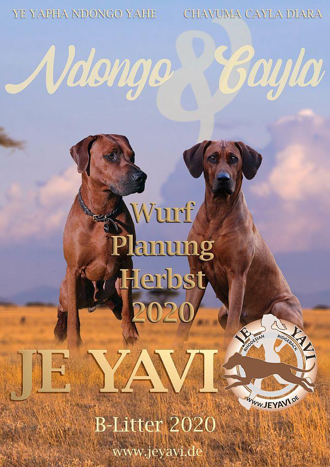YeJavi_B-Wurf_Herbst_2020_Planung_960x680